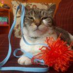 DIY Yarn Cat Toys