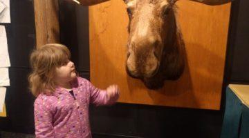 Bell Museum of Natural History – Minneapolis, Minnesota