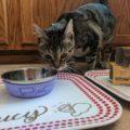 DIY Personalized Cat Feeding Stations