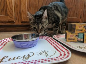 DIY Personalized Cat Feeding Stations